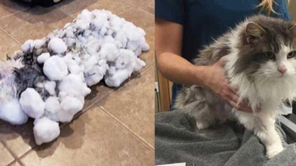 Un veterinario consigue reanimar a un gato que llegó a su clínica congelado