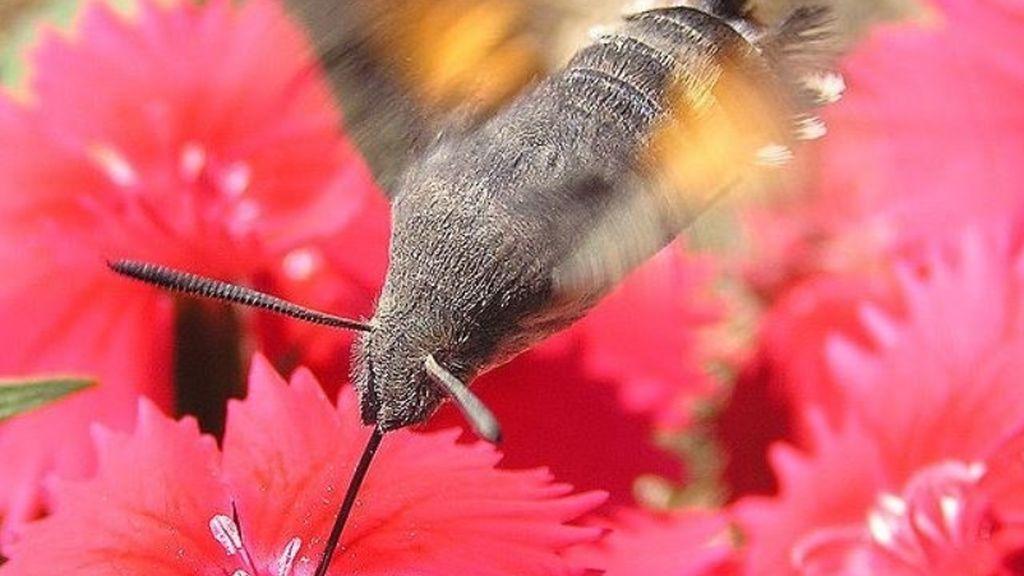 Estamos extinguiendo a los insectos y lo pagaremos: un 40% desaparecerá en pocas décadas