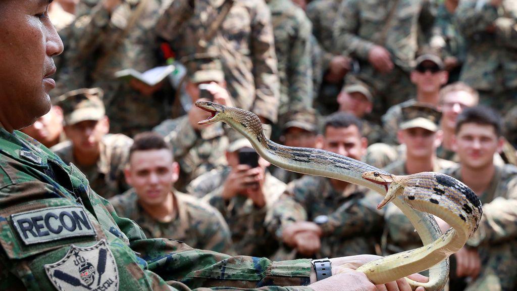 Cobra Gold,  un entrenamiento militar extremo e internacional en el que se bebe sangre de serpientes decapitadas