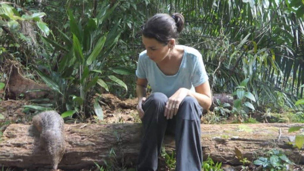 El Pangolín, el animal con el que más se trafica