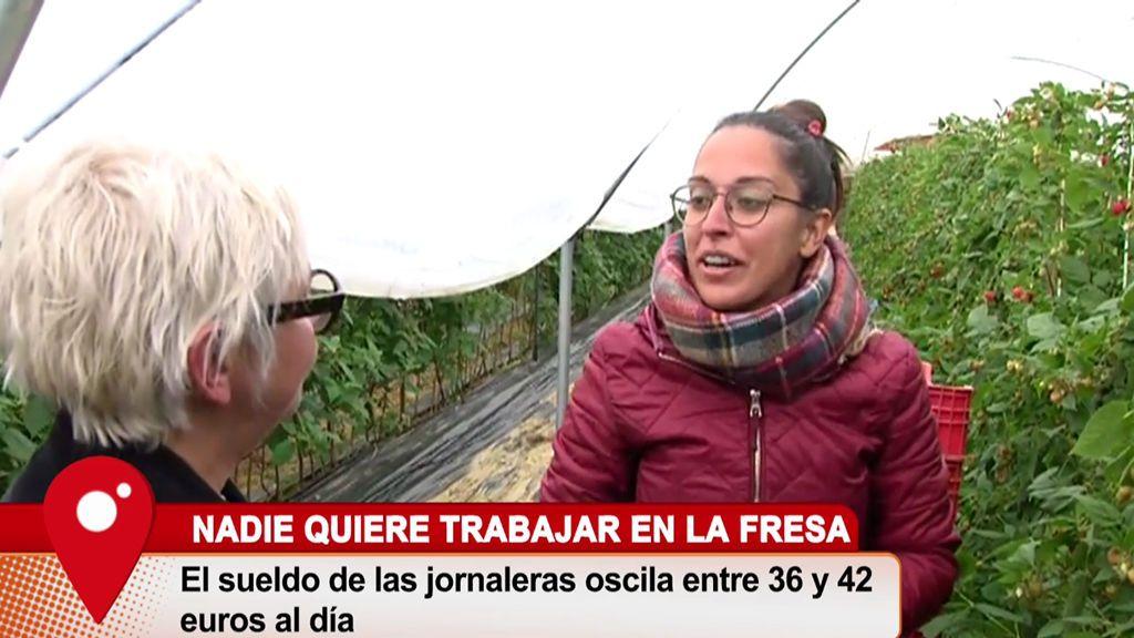 Los españoles no quieren trabajar en la recogida de los frutos rojos