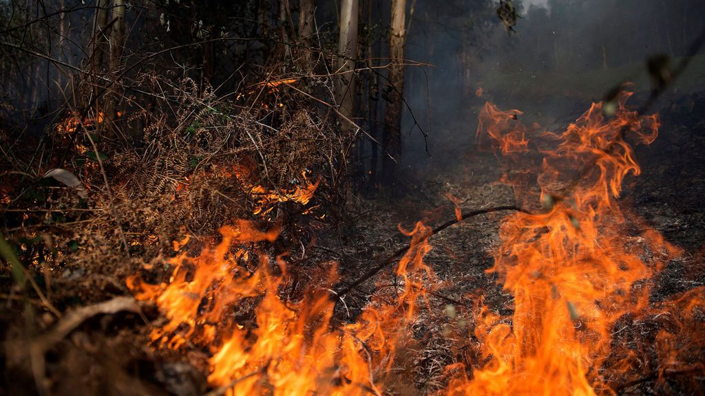 Los causantes del fuego: del pirómano al incendiario