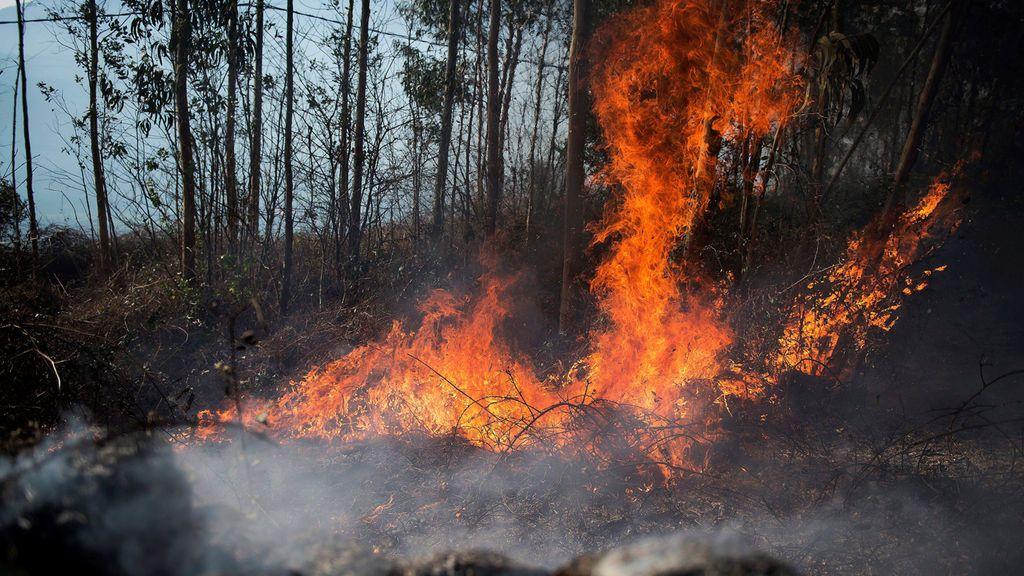 La otra cara del fuego: su importancia como herramienta de gestión y su potencial económico