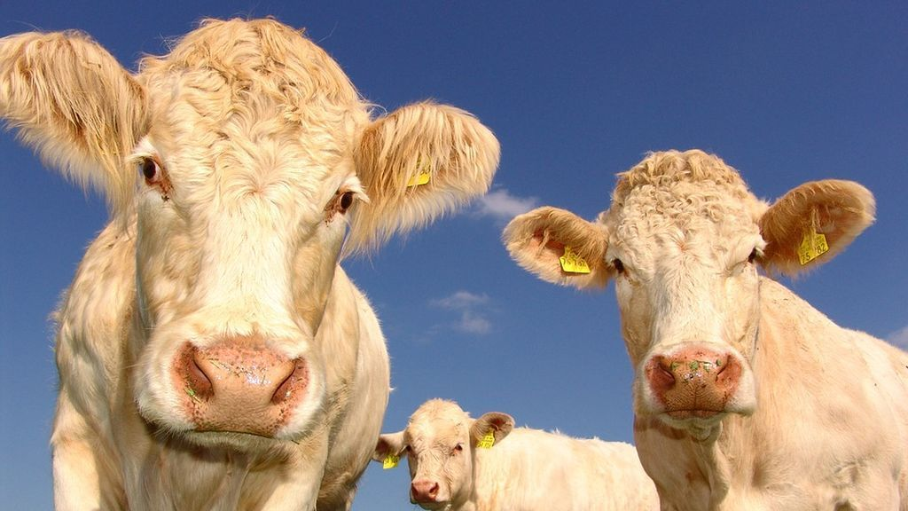¿Puede un animal encontrar pareja por Internet? A partir de ahora las vacas sí