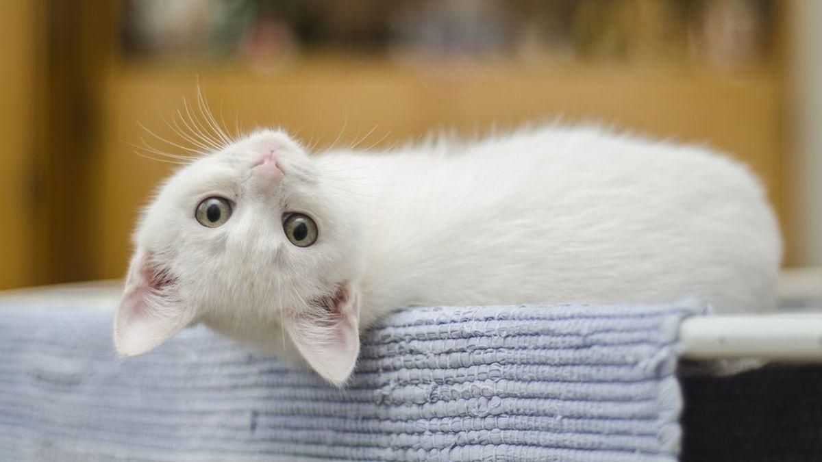 Lo reconozco: quiero más a los gatos que a las personas