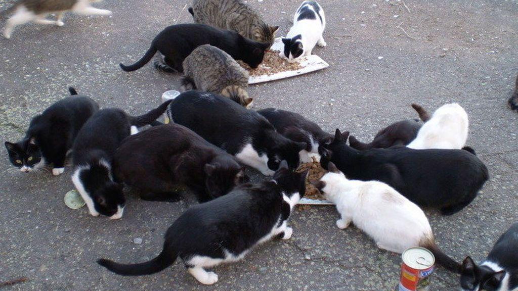 Multas de hasta 300 euros por alimentar a gatos callejeros en un pueblo de Cuenca