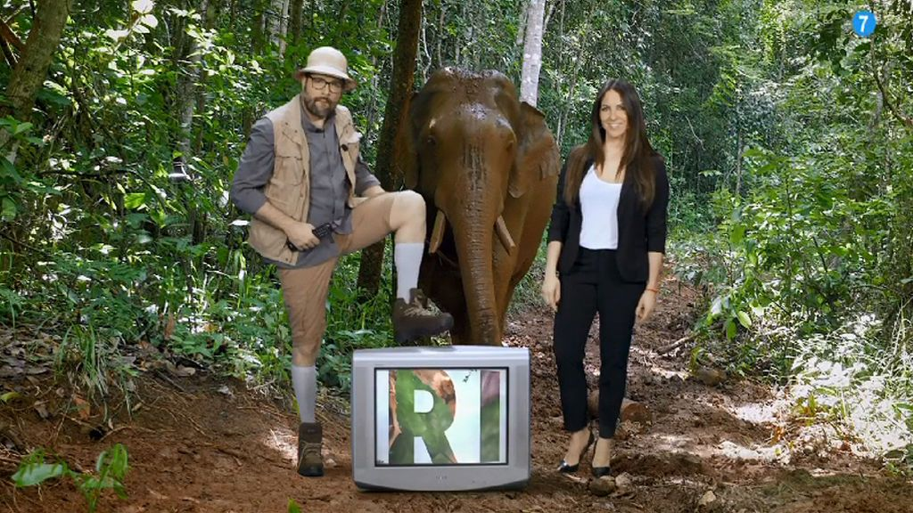 'Safari, a la caza de la tele', estreno el lunes a las 17:00 horas en FDF