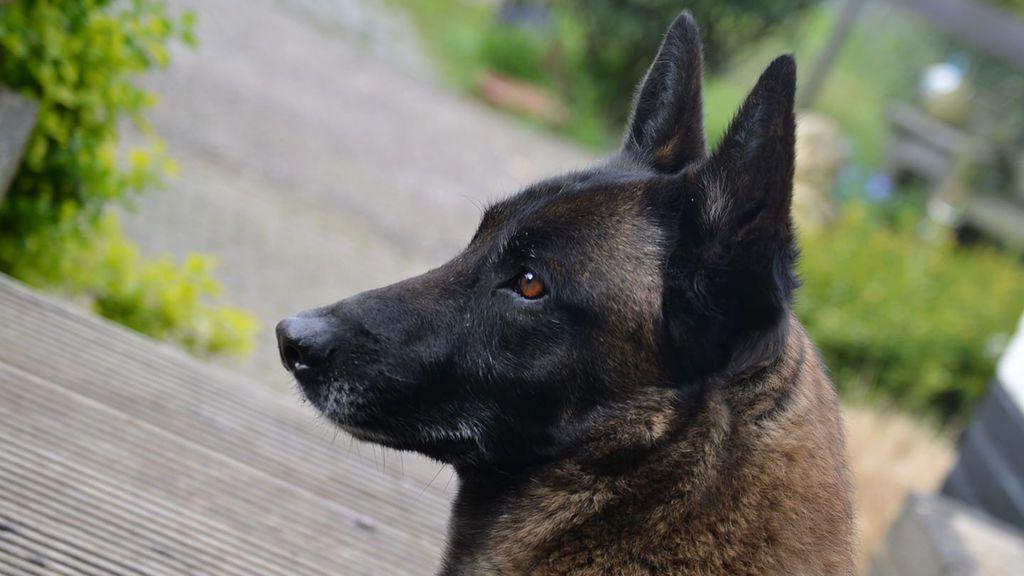 Los perros del Proyecto PEPO