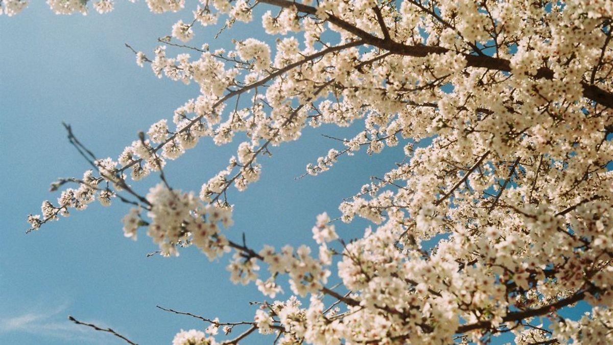 Sí, has leído bien: el viernes arranca la primavera (meteorológica)