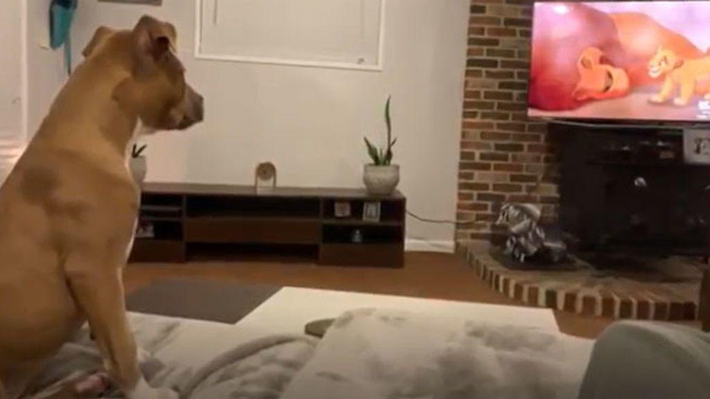 Una perra llora viendo la escena más triste de la película de 'El Rey León'