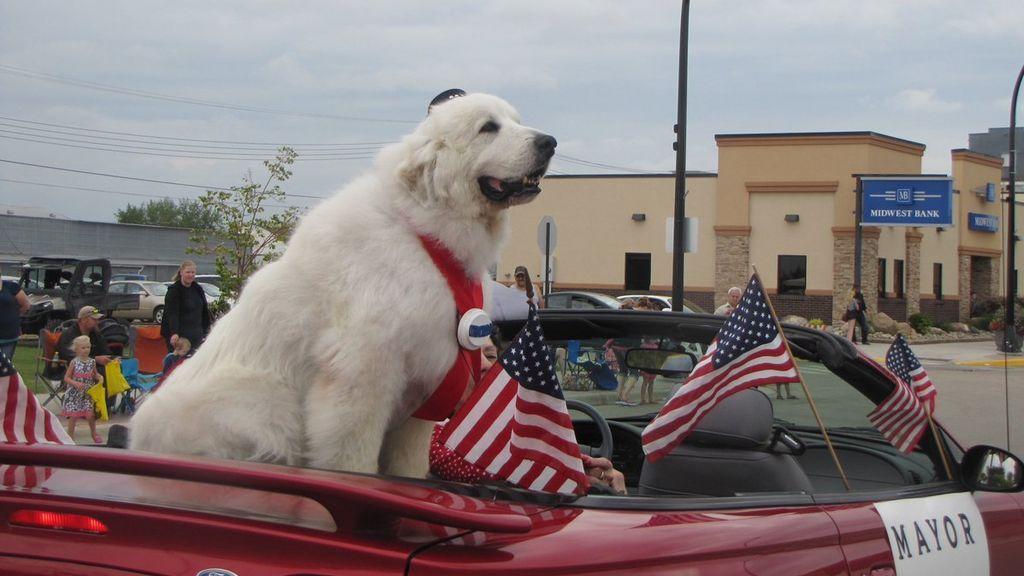 Ha muerto Duke, el primer perro alcalde al que votaron todos los habitantes de su ciudad