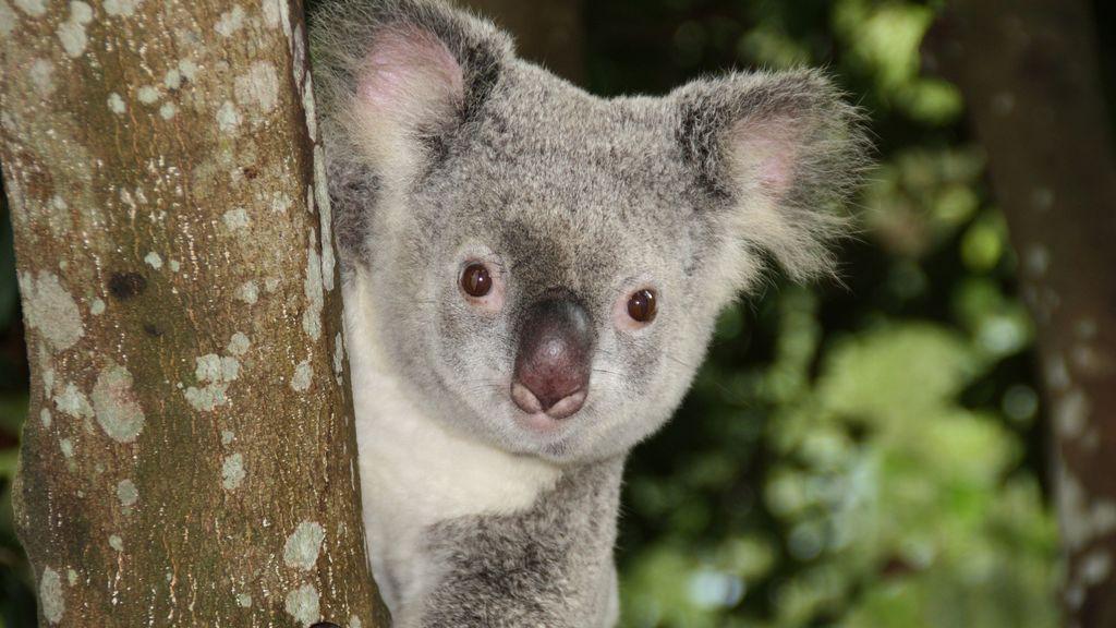 australia-1068578_1920