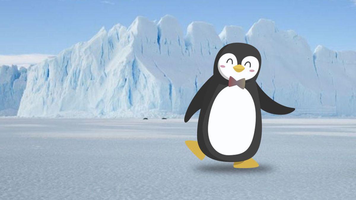 Tu ojo te engaña: de qué color ves la pajarita del pingüino más majo de los hielos