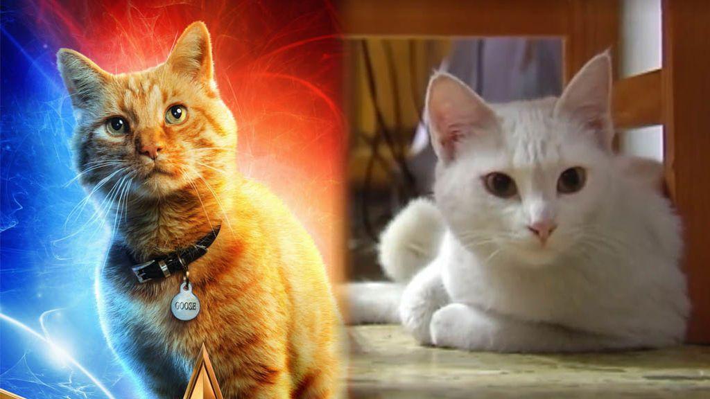 En España también hay un super-gato Marvel: se llama Misi y ha salvado a su familia en un incendio
