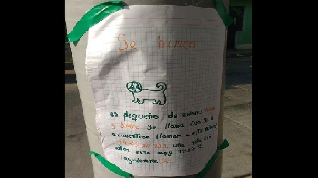 El conmovedor cartel de una niña de 7 años para encontrar a su perro