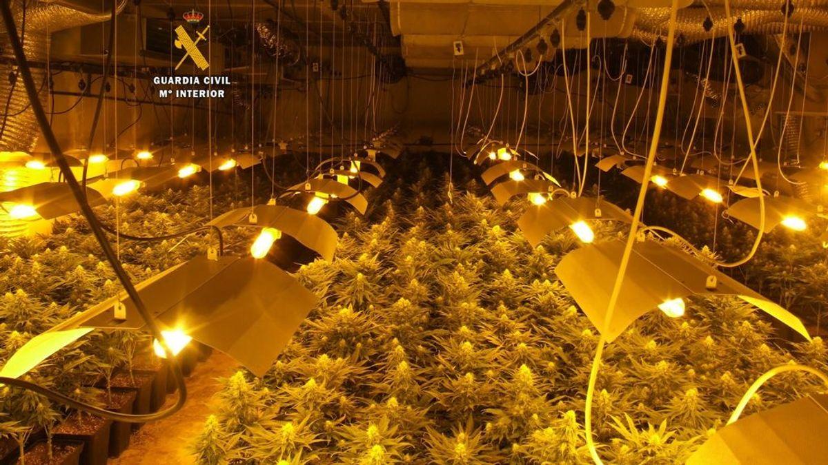 Tres personas detenidas en Ronda (Málaga) tras desmantelar la Guardia Civil una plantación de marihuana