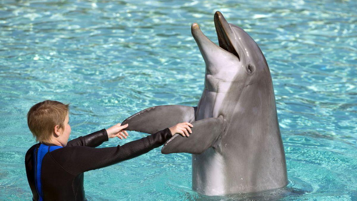 Piden prohibir a un parque acuático criar delfines en cautividad