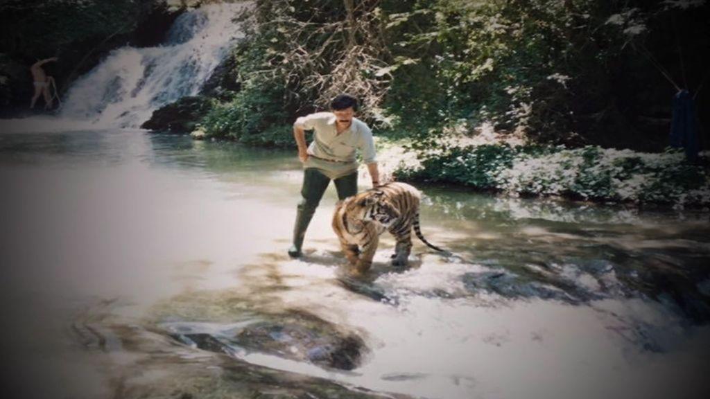 La historia de Shere-Khan, el tigre español que se enfrentó a otro felino para salvar la vida de su cuidador