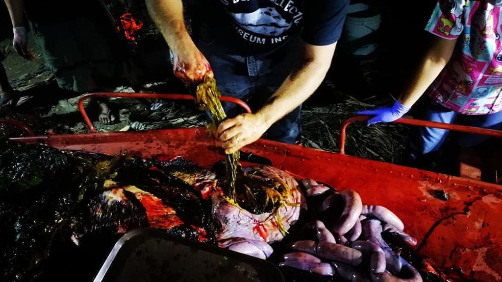 Encuentran una ballena muerta con más de 40 kilos de plástico en su estómago