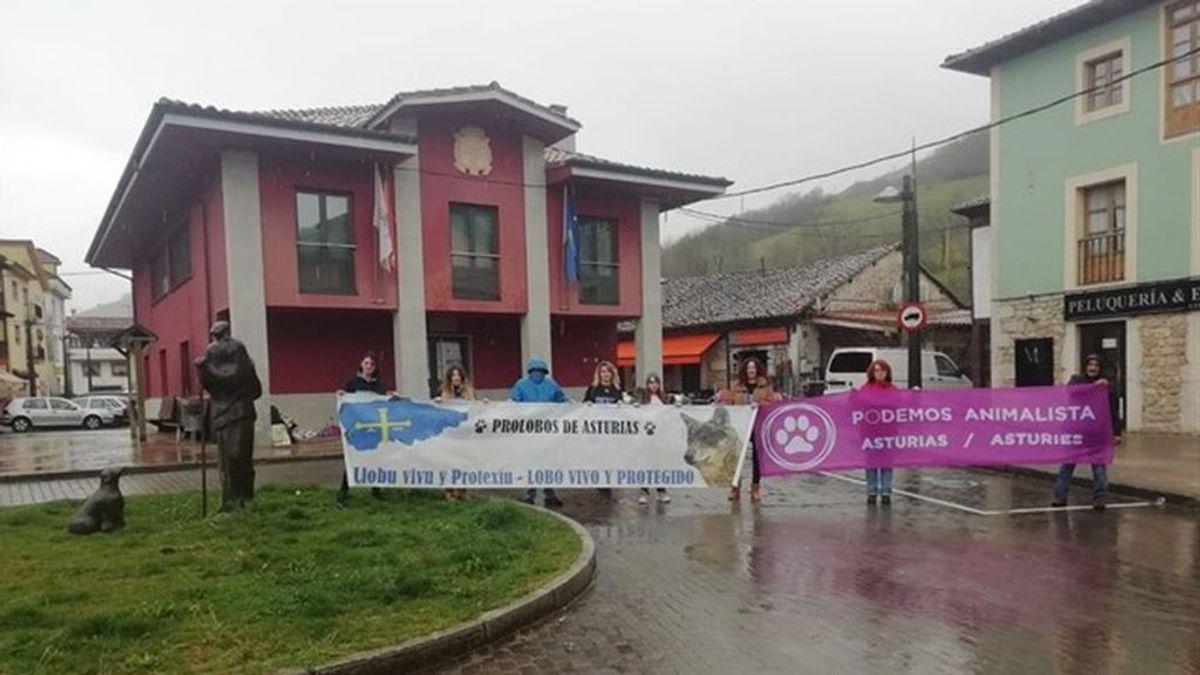 Lobos decapitados o colgados de señales, denuncian el aumento de la violencia contra esta especie en Asturias