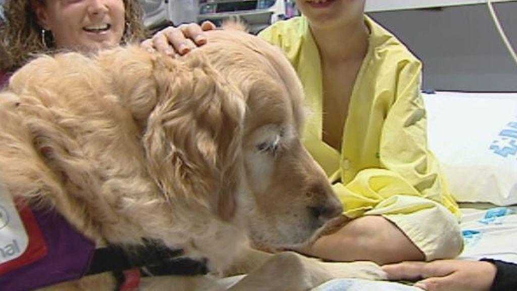 Perros en la UCI pediátrica para reducir el dolor y la ansiedad