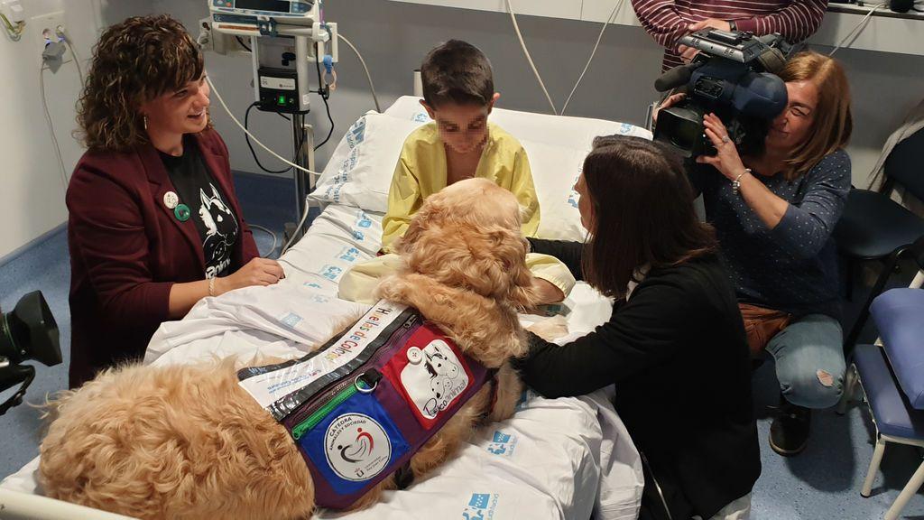 Zénit, el Golden Retriever de 6 años, que reduce y alivia el dolor de los niños hospitalizados