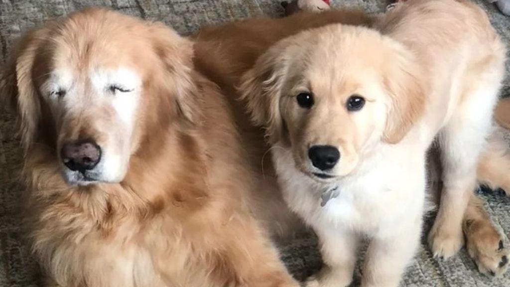 El perro lazarillo de un perro ciego