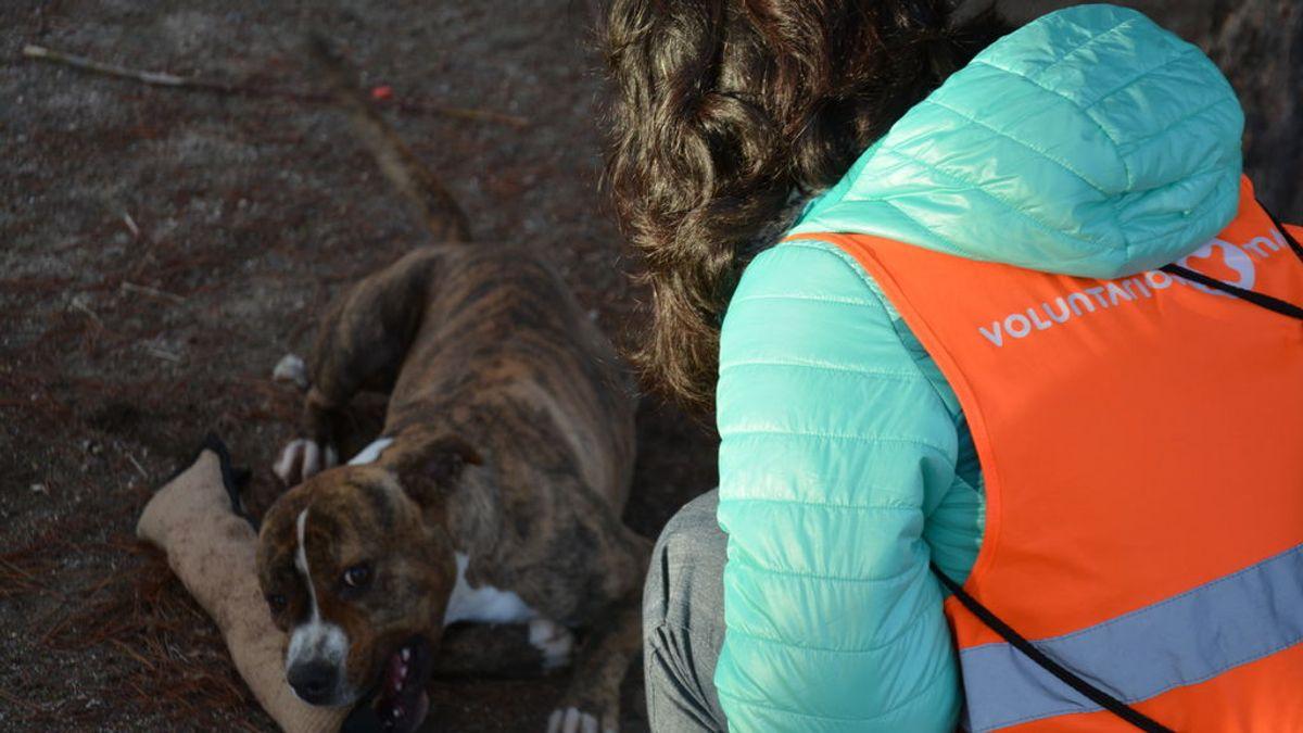 Los voluntarios crecen pero los abandonos de animales no cesan desde hace 5 años