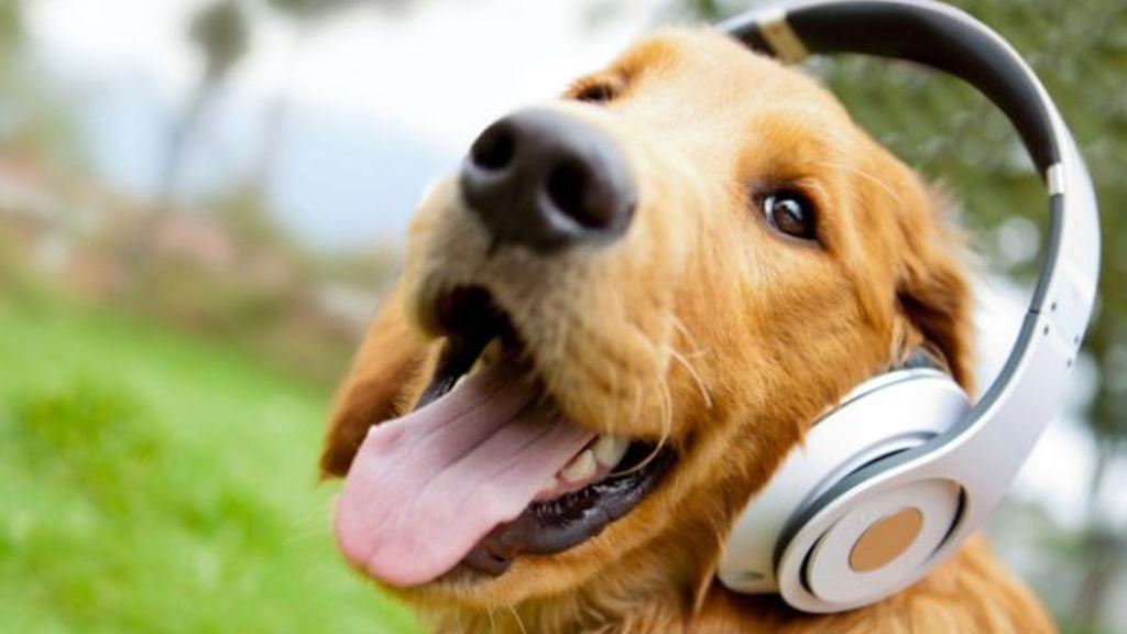 Test: ¿Eres un buen dueño de perro?