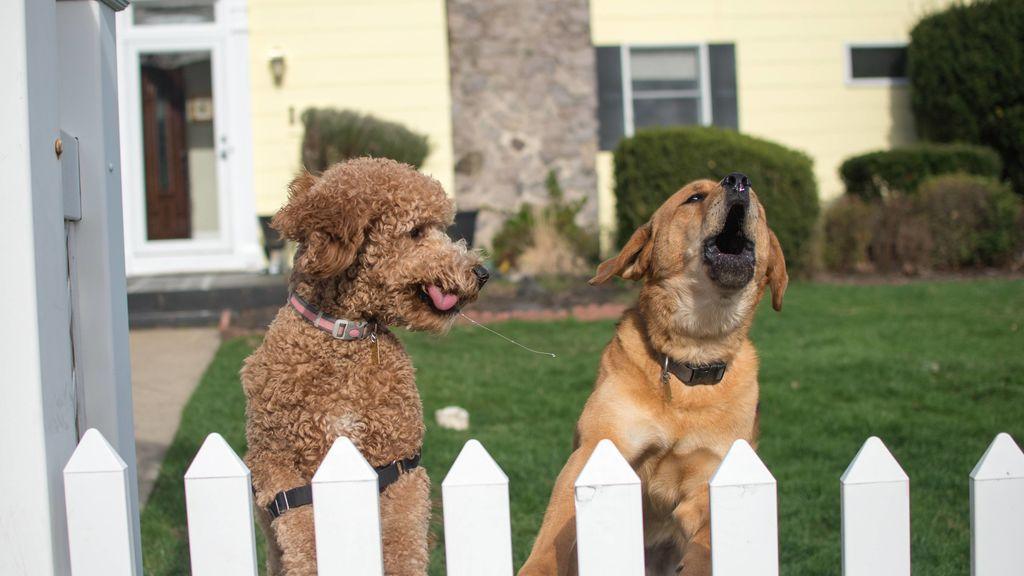 La ciencia ya lo sabe: cómo reconoce tu perrete a una mala persona cuando la ve