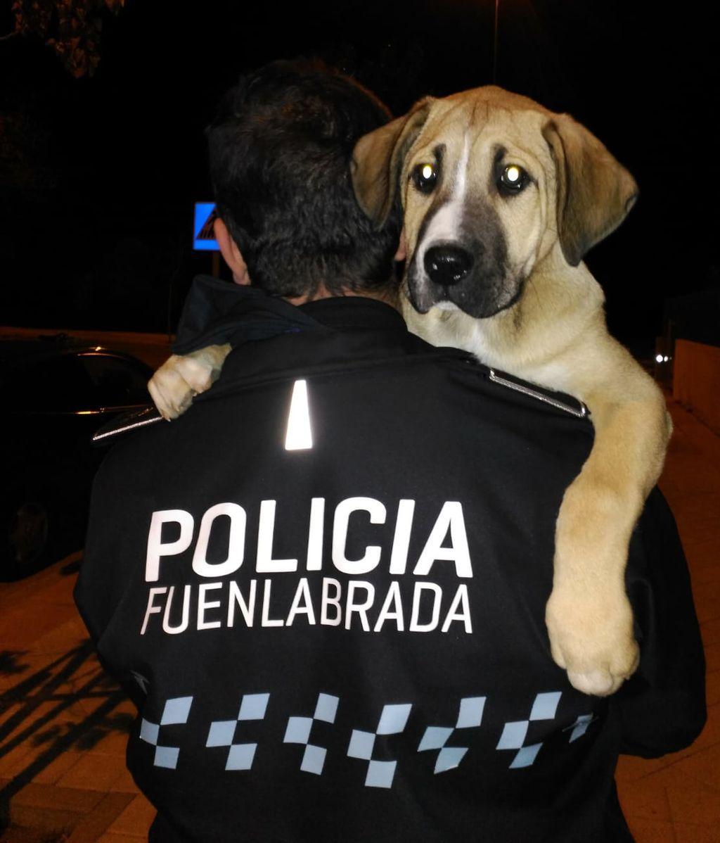 No sabes todo lo que hace la policía por los animales abandonados