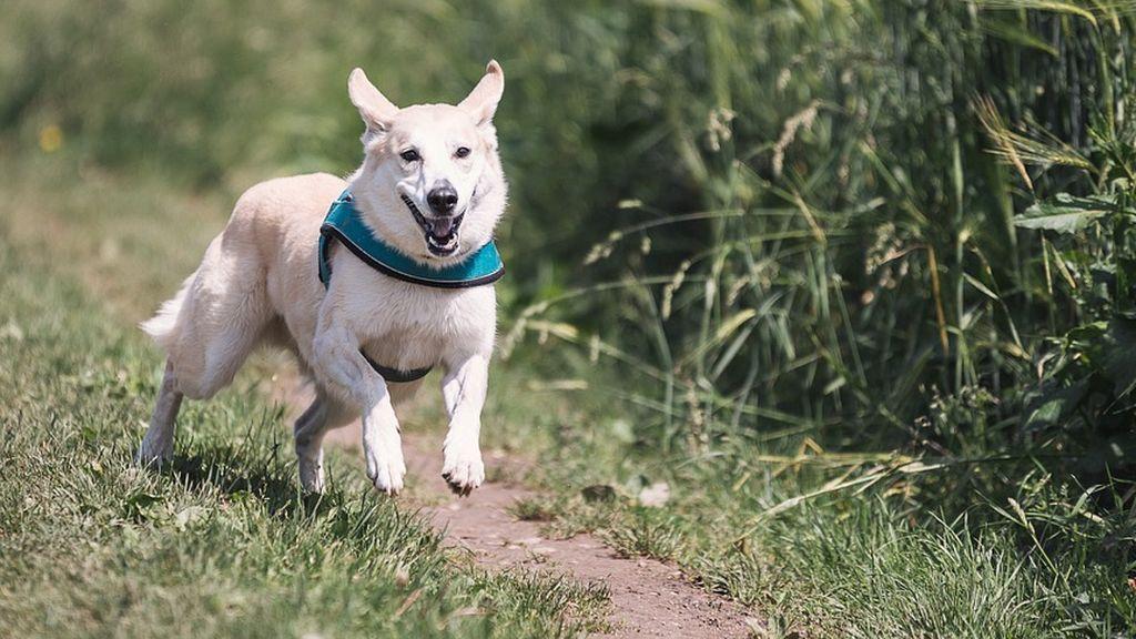 Muere un perro mientras protegía a sus dueños durante un tiroteo