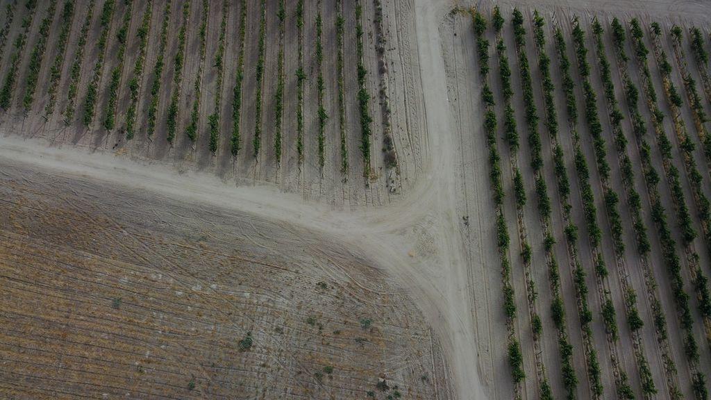 Drama en el campo: cosechas enteras se pierden tras las heladas de la masa de aire polar