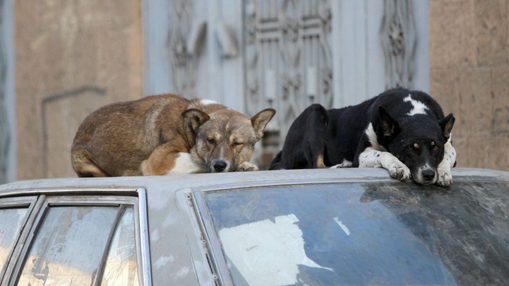 Una diputada mexicana propone matar a perros y gatos callejeros e incendia las redes