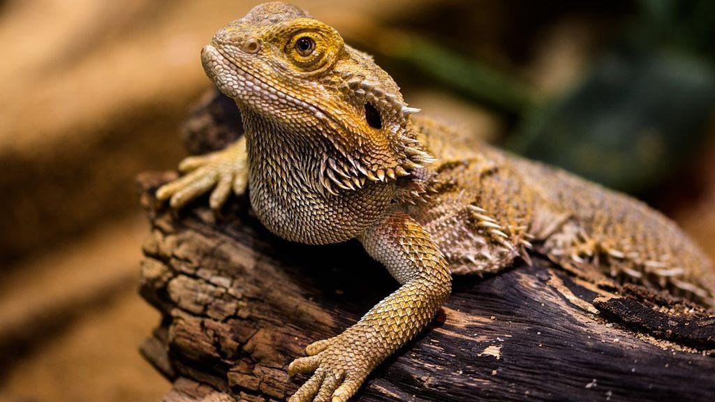 La distribución de las especies ante el cambio climático podría hacerse gracias a la tolerancia térmica