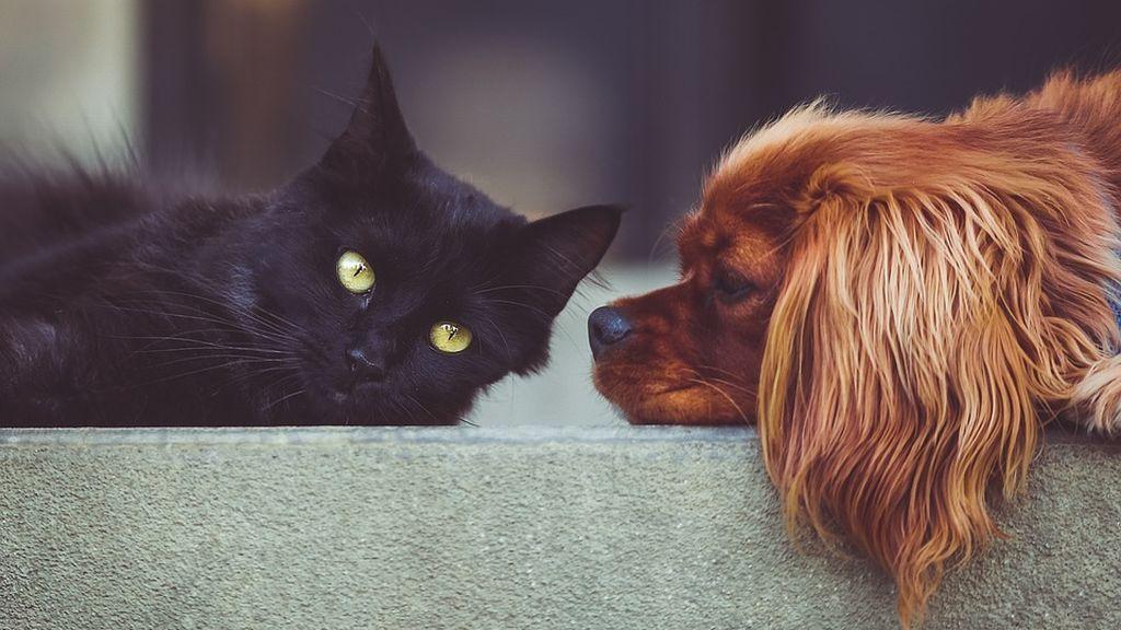 Conoce los beneficios que aportan las mascotas a las personas mayores
