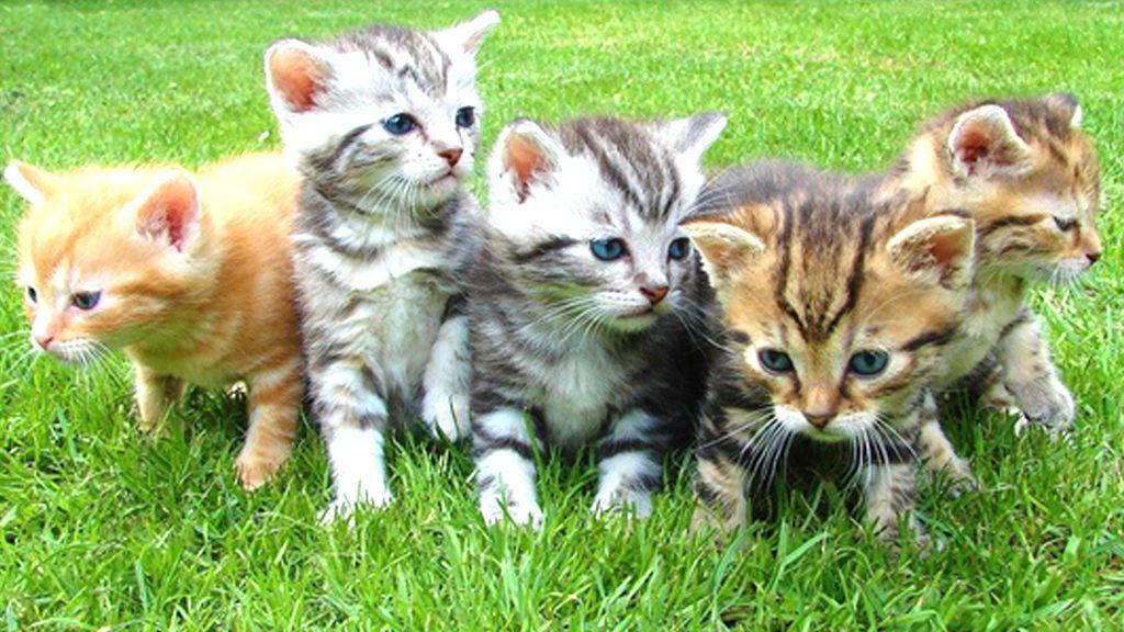 Cómo hacerte voluntario de una colonia de gatitos: así sobreviven en la calle