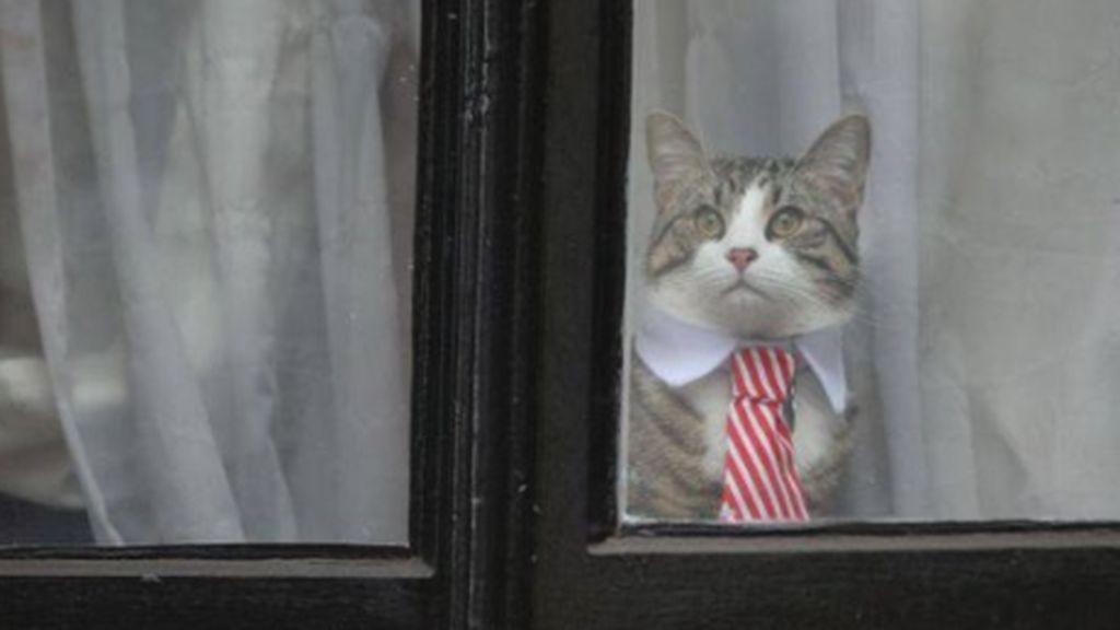 Assange detenido y criticado, pero ¿qué pasó con su gato?