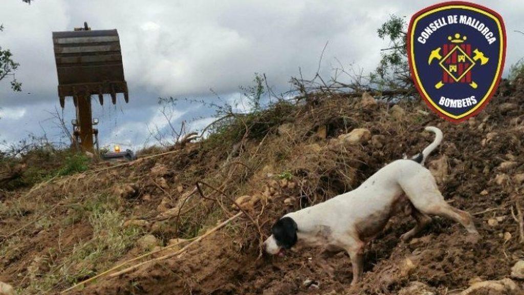 Muere Perry, el perro que participó en la búsqueda de víctimas tras las inundaciones de Sant Llorenç
