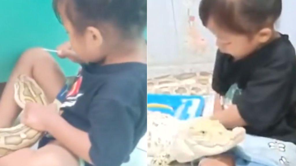 Graba a su hija de 3 años mientras juega con un cocodrilo y una pitón