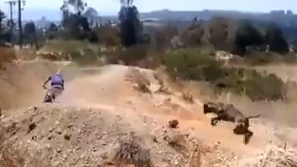 El vídeo viral de un perro acompañando a su dueño mientras practica BMX