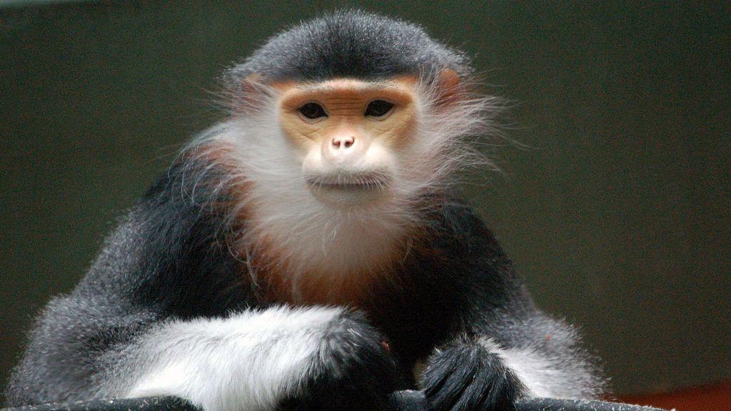 A prisión tres hombres por emitir en directo en Facebook cómo mataban y se comían un mono