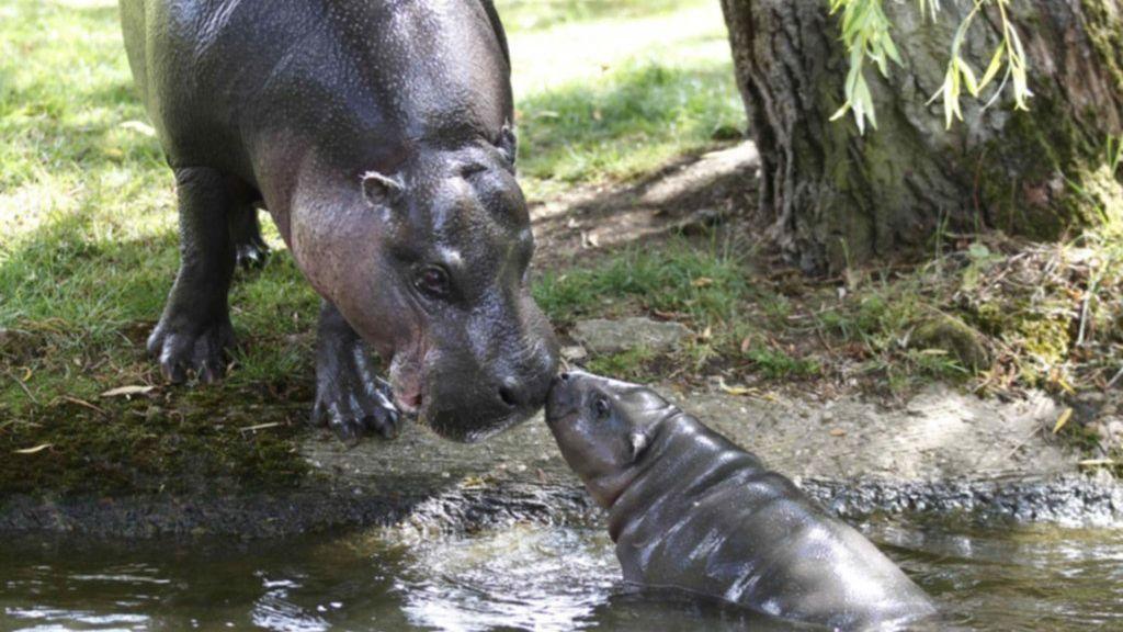 Mueren 28 rinocerontes en un parque natural de Etiopía por causas desconocidas