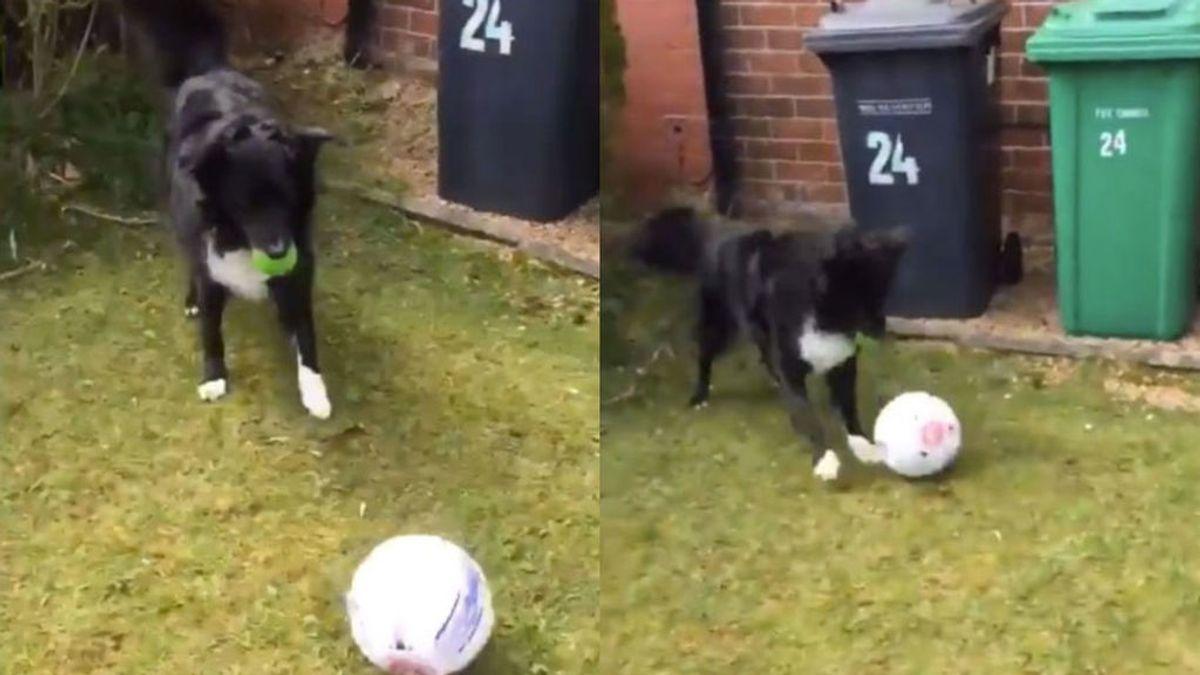 Un perro sorprende al cartero con sus increíbles habilidades con la pelota y le obliga a jugar con él para dejar el correo