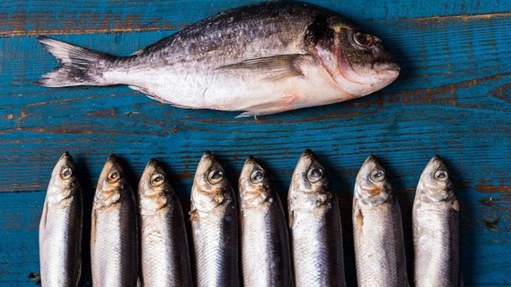 pescadoazul