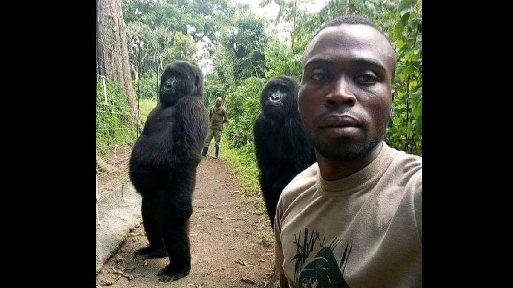 La historia del famoso 'selfie' con los dos gorilas muy humanos
