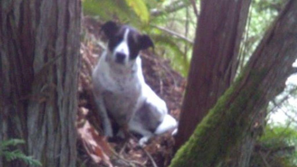El perro más fiel: ladra sin parar hasta que encuentran a su dueño muerto