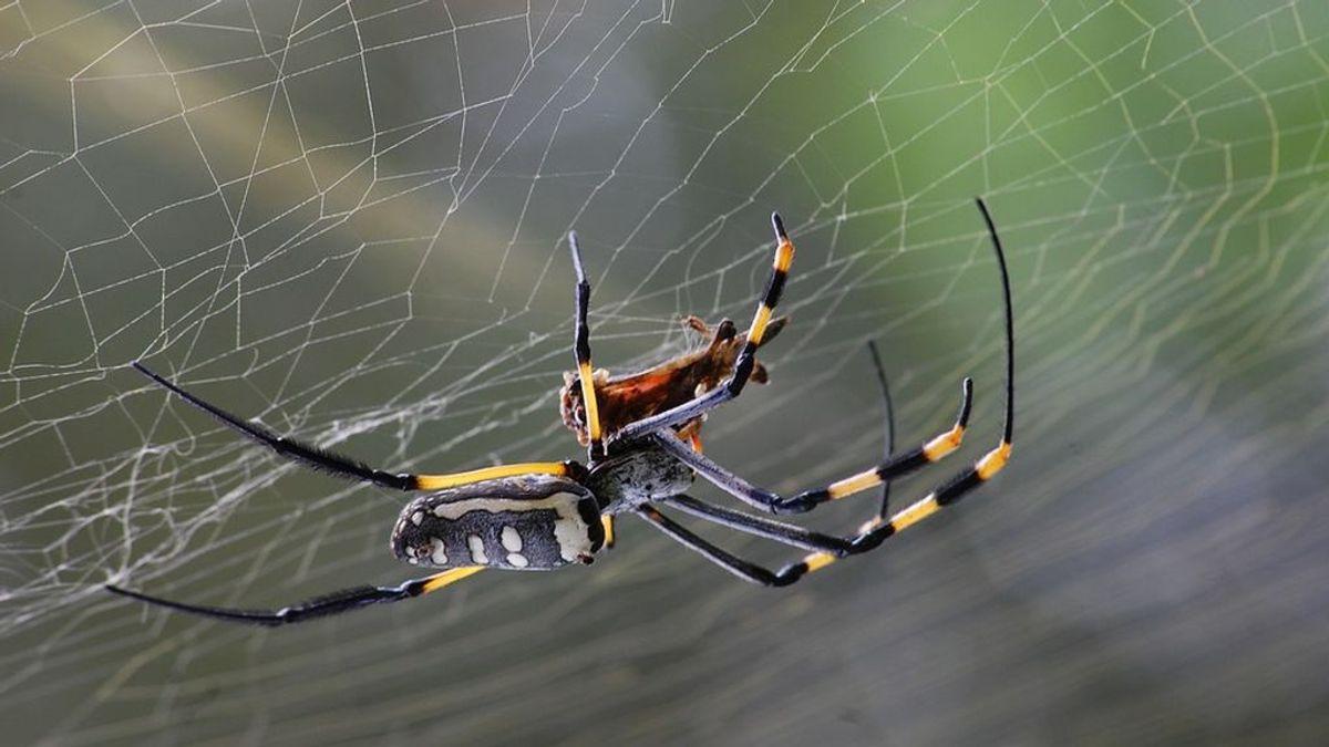 """Un hombre acude a un hospital por """"dolor de oídos"""" y descubren una araña en su interior"""