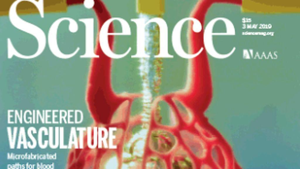 La creación de órganos en 3D más cerca