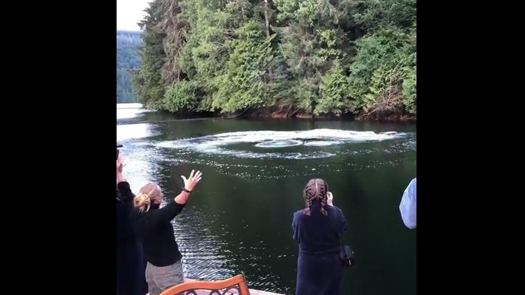 Un despertar diferente en Canadá: dos ballenas sorprenden a un grupo de turistas